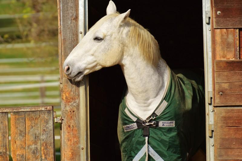 horse-1006558_1920.jpg